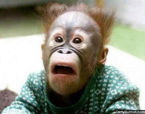 db571-shocked-monkey.jpg